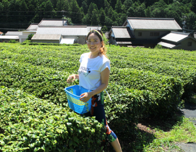 Tea leaf harvest experience on a 190 years old tea plantation